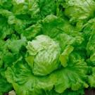 HOBBY, Zelenina – Salát hlávkový Ledano, 3857