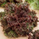 HOBBY, Zelenina – Salát listový Roden, 3868