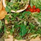 HOBBY, Zelenina – Salát listový směs křezu mladých listů, 3878
