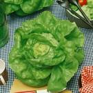 HOBBY, Zelenina – Salát hlávkový Humil, 3882