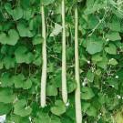 HOBBY, Zelenina – Kalabasa Kalabasa, 4091