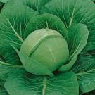 HOBBY, Zelenina – Zelí hlávkové Sláva F1, 4202