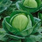 HOBBY, Zelenina – Zelí hlávkové Unikát F1, 4206