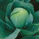 HOBBY, Zelenina – Zelí hlávkové Zora, 4211