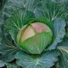 HOBBY, Zelenina – Zelí hlávkové Pourovo polopozdní, 4222
