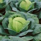 HOBBY, Zelenina – Zelí hlávkové Holt, 4224