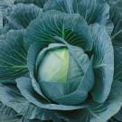 HOBBY, Zelenina – Zelí hlávkové Ritmo F1, 4243