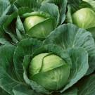 HOBBY, Zelenina – Zelí hlávkové Korino F1, 4250