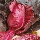 HOBBY, Zelenina – Zelí hlávkové Kalibos, 4304