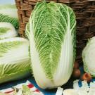 HOBBY, Zelenina – Zelí pekingské Concord F1, 4406