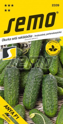 HOBBY, Zelenina - Okurka nakládačka Anya F1 (SM 5341 F1), 2339 (Cucumis sativus L.)