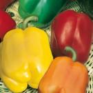 HOBBY, Zelenina – Paprika roční Směs barev zeleninová F1, 2540