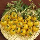 HOBBY, Zelenina – Rajče keříčkové Minigold, 3119