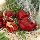 HOBBY, Zelenina – Paprika Carolina Reaper – pálivá, 2570