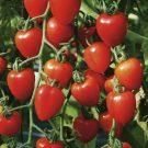 HOBBY, Zelenina – Rajče tyčkové Gardenberry F1, 3268