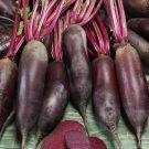 HOBBY, Zelenina – Řepa salátová Karkulka, 3510