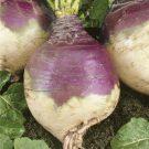 HOBBY, Zelenina – Tuřín Magres, 4118