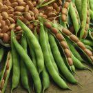 HOBBY, Zelenina – Fazol zahradní keříčkový Nugetka, 0924