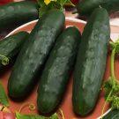 HOBBY, Zelenina – Okurka setá salátová, 2409