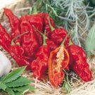HOBBY, Zelenina – Paprika Bhut Jolokia – pálivá, 2571