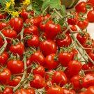 HOBBY, Zelenina – Rajče tyčkové Jahodo, 3279