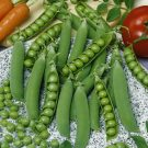 HOBBY, Zelenina – Hrách setý dřeňový Cetris, 1044