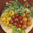 HOBBY, Zelenina – Rajče tyčkové Směs barev Cherry F1, 3250