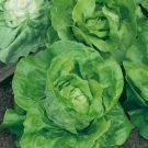 HOBBY, Zelenina – Salát hlávkový Maršálus, 3845
