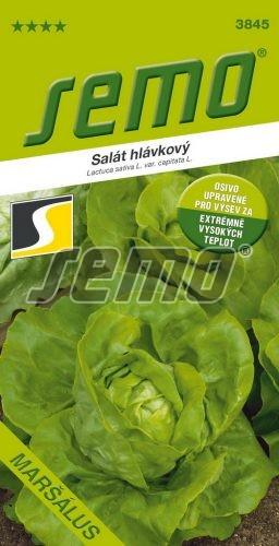HOBBY, Zelenina - Salát hlávkový Maršálus, 3845 (Lactuca sativa L. var. capitata L.)