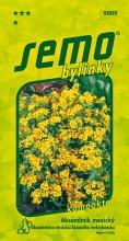 HOBBY, Bylinky - Aksamitník mexický, 5885 (Tagetes lucida)