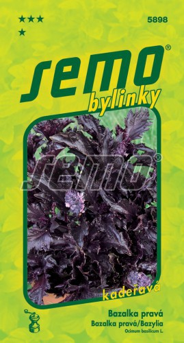 HOBBY, Bylinky - Bazalka pravá Purple Ruffles, 5898 (Ocimum basilicum L.)