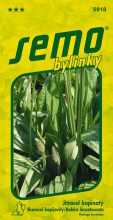 HOBBY, Bylinky - Jitrocel kopinatý, 5918 (Plantago lanceolata)
