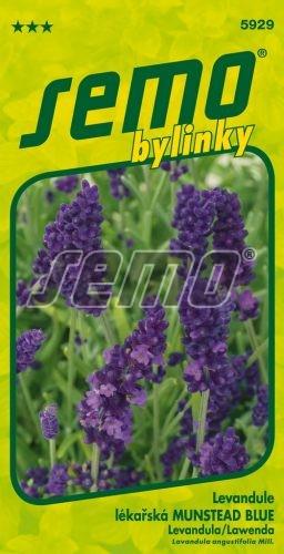 HOBBY, Bylinky - Levandule lékařská Munstead Blue, 5929 (Lavandula angustifolia Mill.)