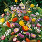 HOBBY, květiny letničky - Směs letniček, 9840