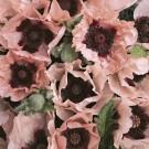 HOBBY, květiny trvalky - Mák východní, 6170 (Papaver orientale L.)