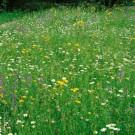 HOBBY, květiny trvalky - Směs trvalek, 6440