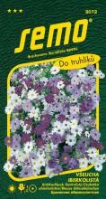 HOBBY, Květiny letničky - Všelicha iberkolistá směs, 9072 (Brachycome iberidifolia)