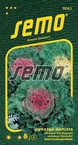 HOBBY, Květiny letničky - Kapusta okrasná směs barev, 9085 (Brassica oleracea)