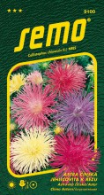 HOBBY, Květiny letničky - Astra čínská Electric směs, 9100 (Callistephus chinensis)