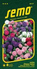 HOBBY, Květiny letničky - Astra čínská Colour Carpet směs, 9117 (Callistephus chinensis)