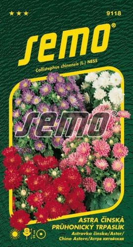HOBBY, Květiny letničky - Astra čínská Průhonický trpaslík směs, 9118 (Callistephus chinensis)