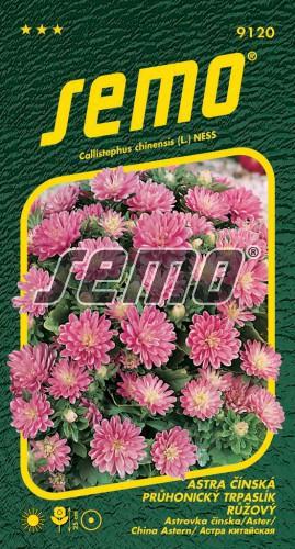 HOBBY, Květiny letničky - Astra čínská Průhonický trpaslík růžový, 9120 (Callistephus chinensis)