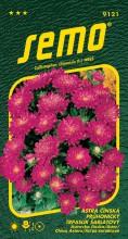 HOBBY, Květiny letničky - Astra čínská Průhonický trpaslík šarlatový, 9121 (Callistephus chinensis)