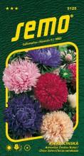 HOBBY, Květiny letničky - Astra čínská Pivoine, 9125 (Callistephus chinensis)