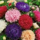 HOBBY, Květiny letničky – Astra čínská Pivoine, 9125