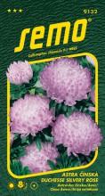 HOBBY, Květiny letničky - Astra čínská Duchesse Silvery Rose, 9132 (Callistephus chinensis)
