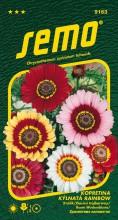 HOBBY, Květiny letničky - Kopretina kýlnatá Rainbow Mix, 9163 (Chrysanthemum carinatum)