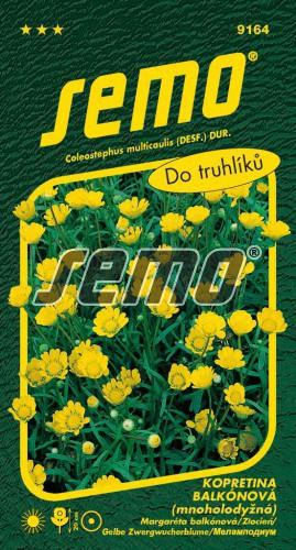 HOBBY, Květiny letničky - Kopretina balkónová Zlatovláska, 9164 (Chrysanthemum multicaulis)