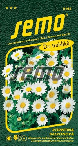 HOBBY, Květiny letničky - Kopretina balkónová Sněhurka, 9165 (Chrysanthemum paludosum)
