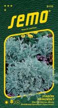 HOBBY, Květiny letničky - Starček přímořský Silverdust, 9170 (Cineraria maritima)